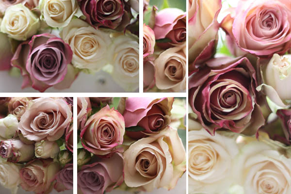 Dusky Pink Roses for weddings