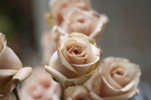 Nude Blush Pink Quicksand Rose