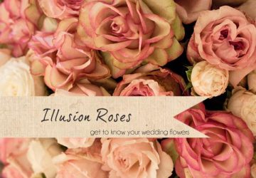 illusion roses wedding flower