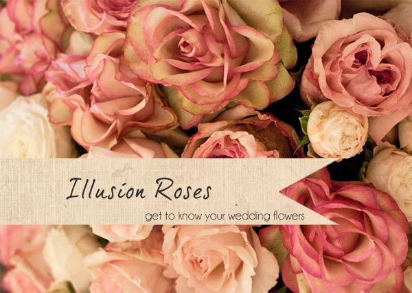 illusion roses wedding flower