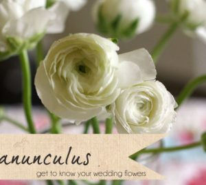 white ranunculus wedding flowers