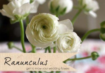 white ranunculus wedding flowers