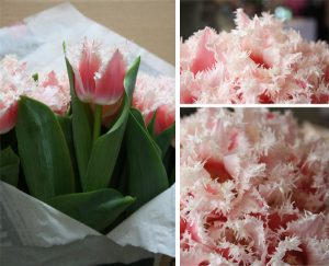 frilly tulips pink
