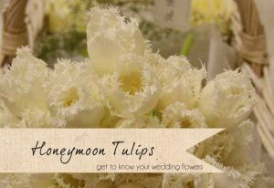 honeymoon tulips spring wedding flowers