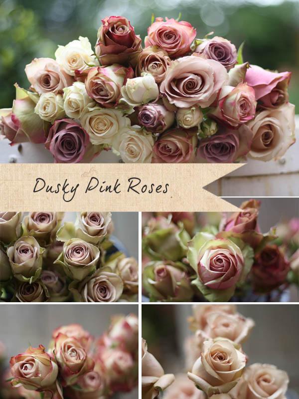 dusky pink roses vintage roses