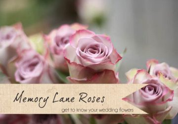 memory lane roses wedding flowers