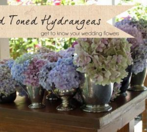 muted toned hydrangeas wedding flowers
