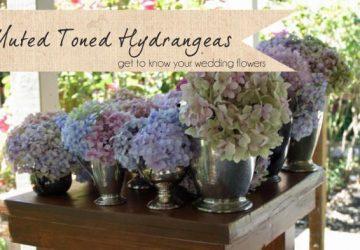 muted toned hydrangeas wedding flowers