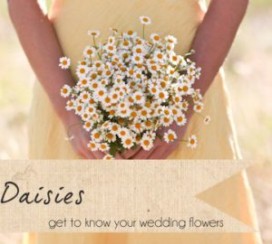 daisy wedding flowers daisies