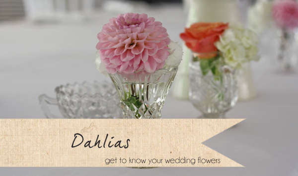 dahlias pink wedding flowers