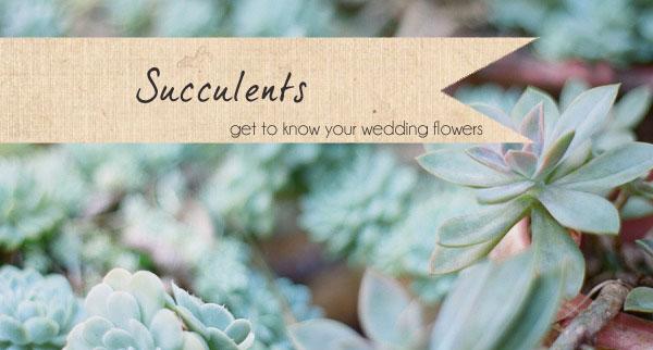 succulents wedding flowers
