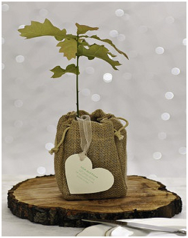 wedding favour baby tree in hessian sack hessian wedding ideas