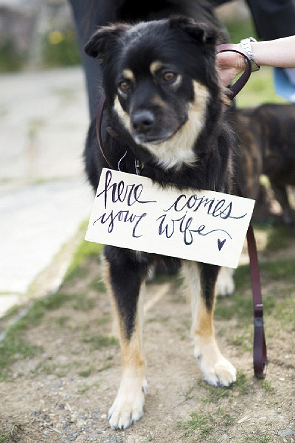 wedding ceremony signs ideas dog ring bearer