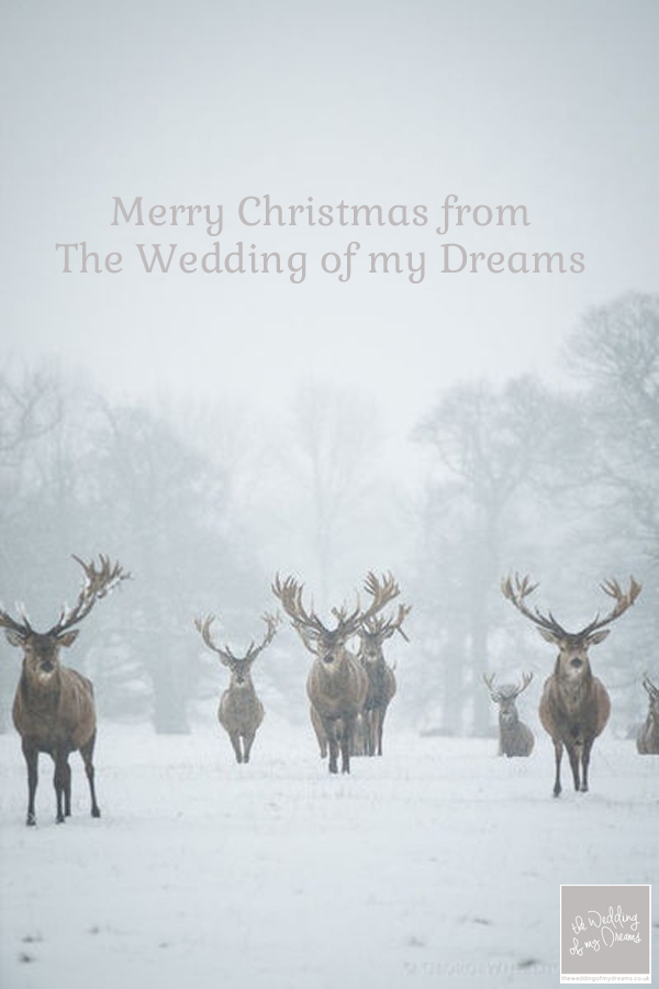 Merry Christmas from The Wedding of my Dreams