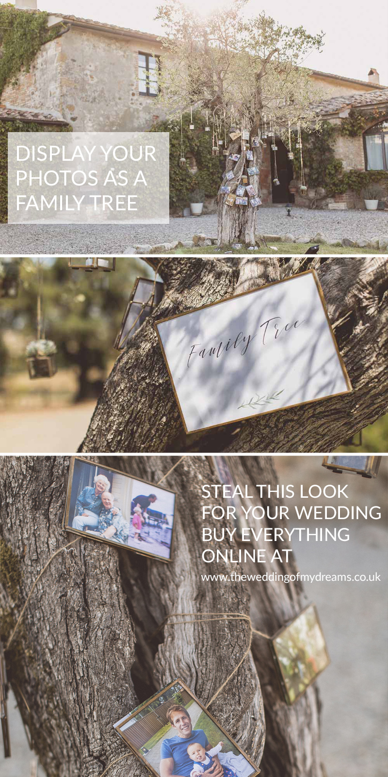 Display wedding photos as family tree Olive Tree Destination Wedding Italy