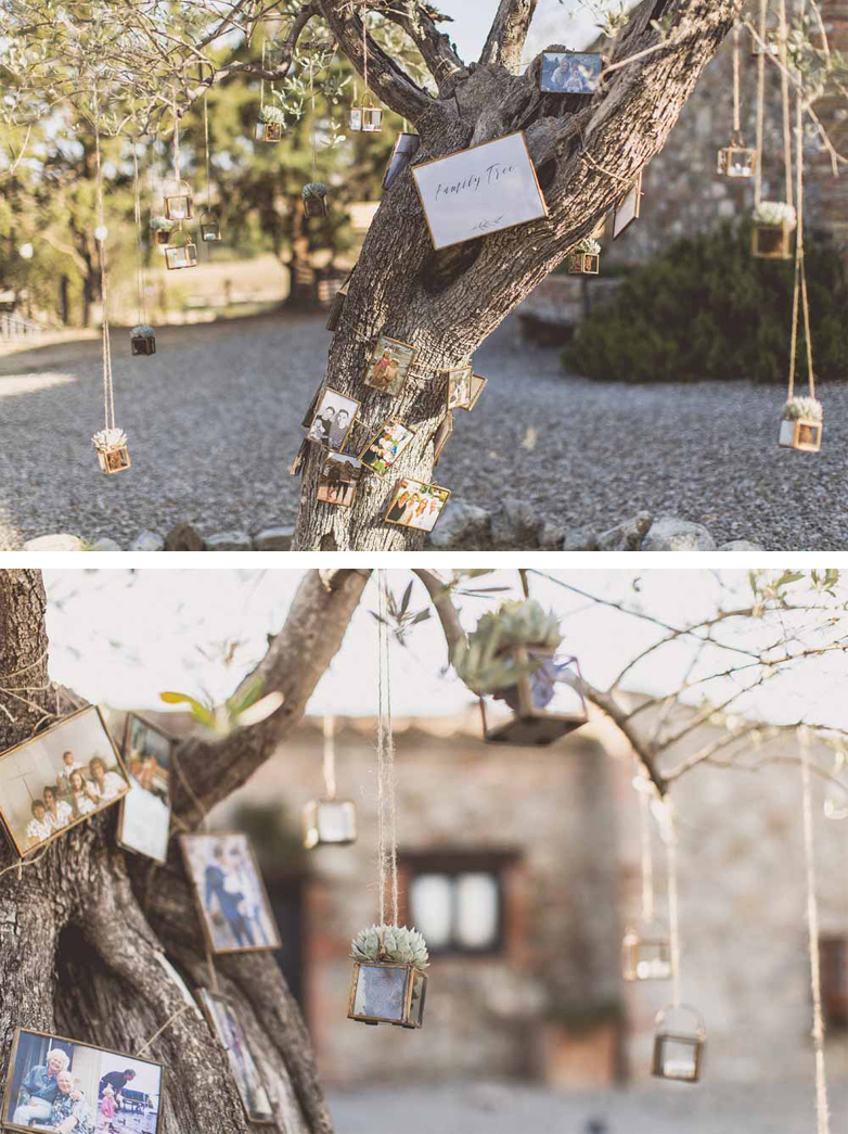 Family Tree Olive Tree Destination Wedding Italy