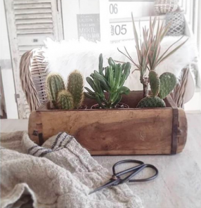 wooden brick mould ideas with cacti